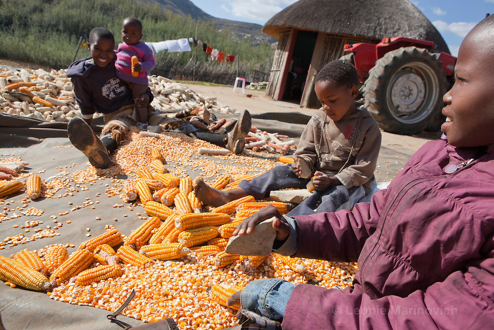 May 2010, Lesotho. Farming activity as the maize harvest is brought in before the winter. Maize is dried and the kernels removed by hand from the stalks for winter conservation. This farmer was a contractor to the rest of the local community.
