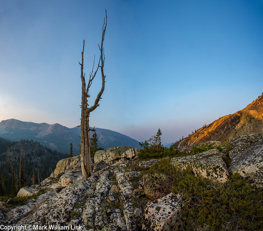 A White Pine skeleton hangs on a ridgeline in the Big Boulder Creek drainage, White Cloud Wilderness.