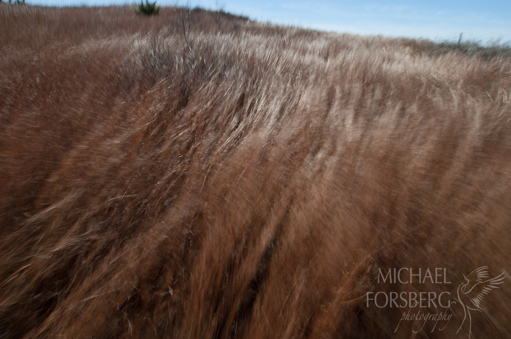 High Plains, western Oklahoma. Four Canyons Preserve, TNC<br /> <br /> Midday, high winds blow hard enough to lay down little bluestem on mixed-grass prairie.