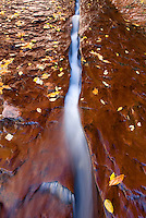 Water flowing through a crack in the red sandstone slickrock, Left Fork of North Creek, Zion National Park Utah USA beautiful