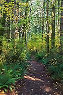 The Vine Maple Trail at Campbell Valley Park in Langley, British Columbia, Canada