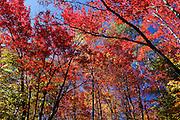 Autumnal forest, Quebec, Canada