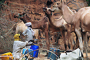 Watering the camels in the Bachik&eacute;l&eacute; Guelta.<br />