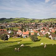 Sheep grazeing on hillside above the Village of Appenzell, Switzerland<br />