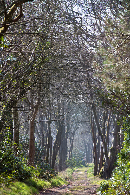 Track through tree avenue on the Shore Walk at Mount Stuart