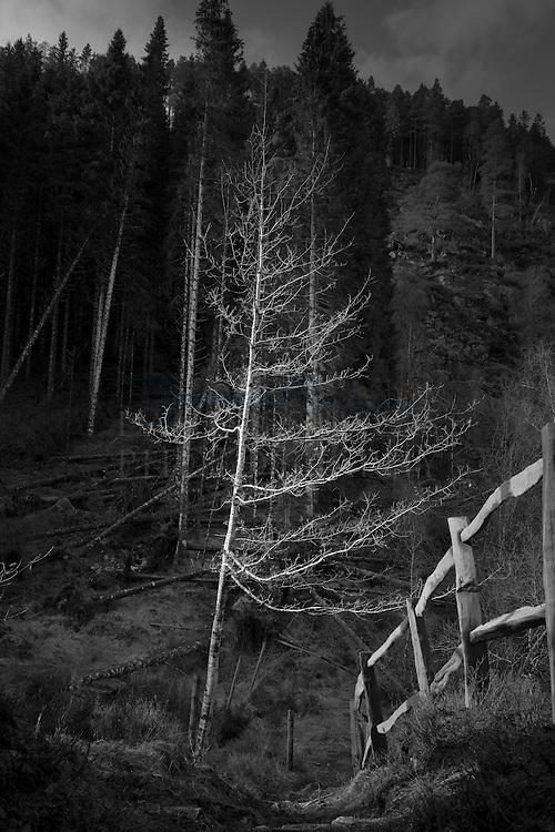 Birch, Glen Garry