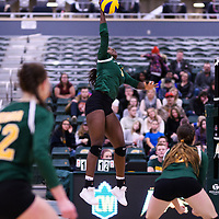 3rd year outside hitter Diana Lumbala (9) of the Regina Cougars in action during Women's Volleyball home game on November 18 at Centre for Kinesiology, Health and Sport. Credit: Arthur Ward/Arthur Images