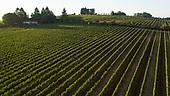 Patricia Green Cellars & vineyard sources