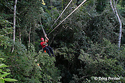 guide rides zipline between two rainforest canopy stations on the aerial trek tour at Jaguar Paw Jungle Resort, Cayo District, Belize, Central America