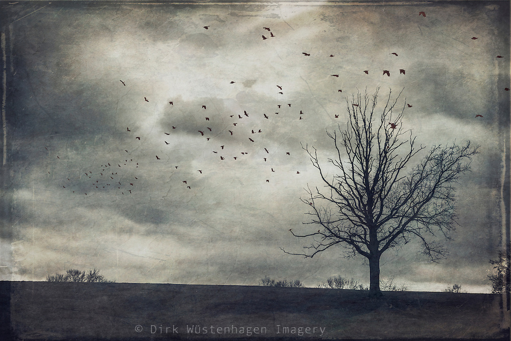 Solitary leafless tree on a paddock on a stormy day with a flock of birds in the sky.<br />