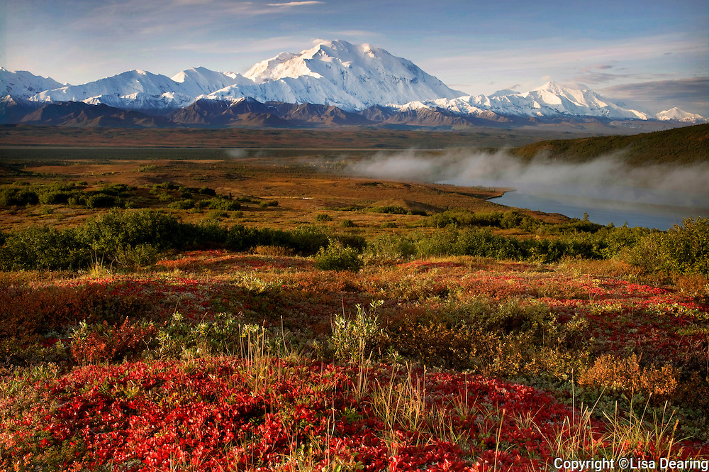 Bearberry in Autumn and Mount Mckinley Above Wonder Lake, Denali National Park, Alaska
