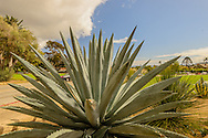 Blue Agave (Agave tequilana) Mission Santa Barbara, also known as Santa Barbara Mission, is a Spanish mission founded by the Franciscan order Santa Barbara, California.