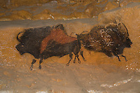 Back to back bison, a recreation of a painting in the Lascaux cave seen here  in La Thot museum ..., Travel, lifestyle