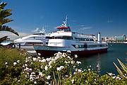 Catalina Express Boats In Long Beach Harbor