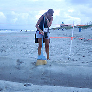 Tammy Jackson clears a trench at a Sea Turtle nest in Carolina Beach, N.C. (Jason A. Frizzelle)