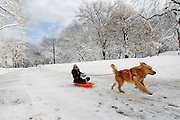 13 years old Olivia riding a snow slade pulled by dog Simba in Central Park in New York City..Photo by Joe Kohen