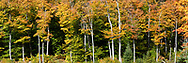 Fall foliage color at a small beaver pond (near the Shilly Shally Shelter) in Gatineau Park, Gatineau, Quebec, Canada.  Photographed from the Lac Fortune Parkway during Fall Rhapsody at Gatineau Park.