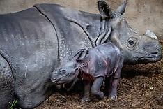 Rotterdam: Baby Rhino born at Zoo - 15 Feb 2017