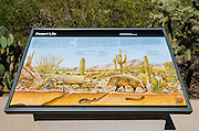 Interpretive display at the Red Hills Visitor Center, Saguaro National Park, Arizona USA