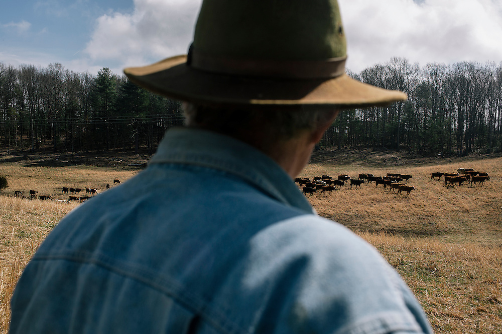 SWOOPE, VA - MARCH 26 Pasture-based farmer Joel Salatin watches his cows move to a different part of the property at Polyface Farms in Swoope, Va. on March 26, 2015. Salatin is one of the heroes of the sustainable-food movement, and he appeals to both left- and right-wing audiences.  (Photo by Greg Kahn/GRAIN for The Washington Post)