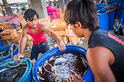 30 OCTOBER 2012 - PATTANI, PATTANI, THAILAND:  Burmese teenagers move barrels of fish in the Thai fishing port of Pattani. Thailand's fishing industry relies on immigrant workers, mostly from Myanmar but also Laos and Cambodia. There have been allegations of worker abuse, including charges that workers are held in slave labor like conditions.There are hundreds of thousands of immigrant workers in the Thai fishing industry. Most are from Myanmar (Burma) but there are also Cambodian and Laotian workers in the industry.    PHOTO BY JACK KURTZ