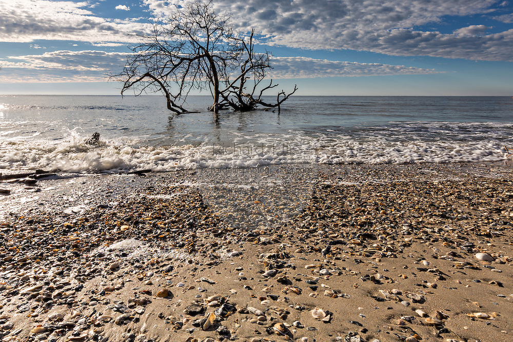 Boneyard Beach at Botany Bay Plantation February 16, 2014 in Edisto Island, South Carolina. Each year 144,000 cubic yards of sand is washed away with the waves at the beach and nearshore eroding the coastal forest along the beachfront.