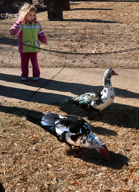 Noelle Smith feeds the ducks at Highland Park in Meridian, Miss. on Jan. 12, 2011. A wide variety of birds and waterfowl populate the park, making it a favorite destination for avian hobbyists. (Photo by Carmen K. Sisson/Cloudybright)