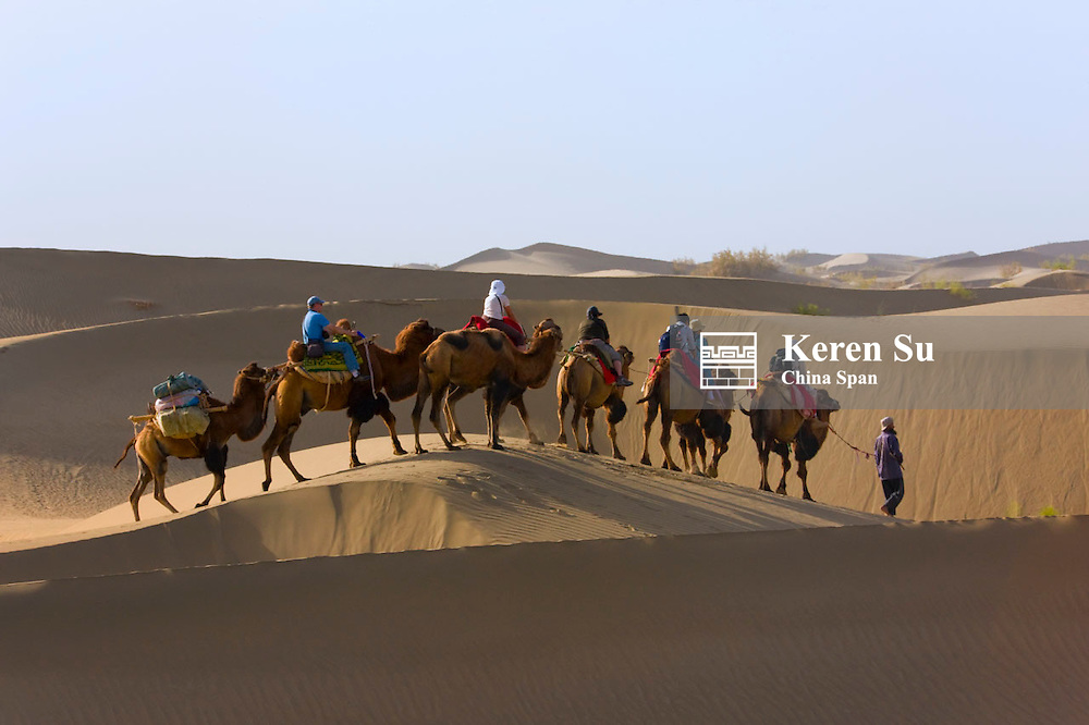 Camel caravan with sand dune in the desert, Aksu, Xinjiang, China