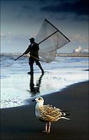 18/11-ZANDVOORT-Een meeuw houdt een garnalenvisser nauwlettend in de gaten.