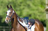 Horse 277