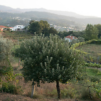 Our friend's place in the Douro region, very close to Porto.