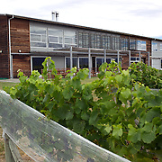 Vines in front of the modern cellar door building at Spy Valley Winery, Lake Timara Road West. Marlborough. New Zealand. 13th February 2011. Photo Tim Clayton.