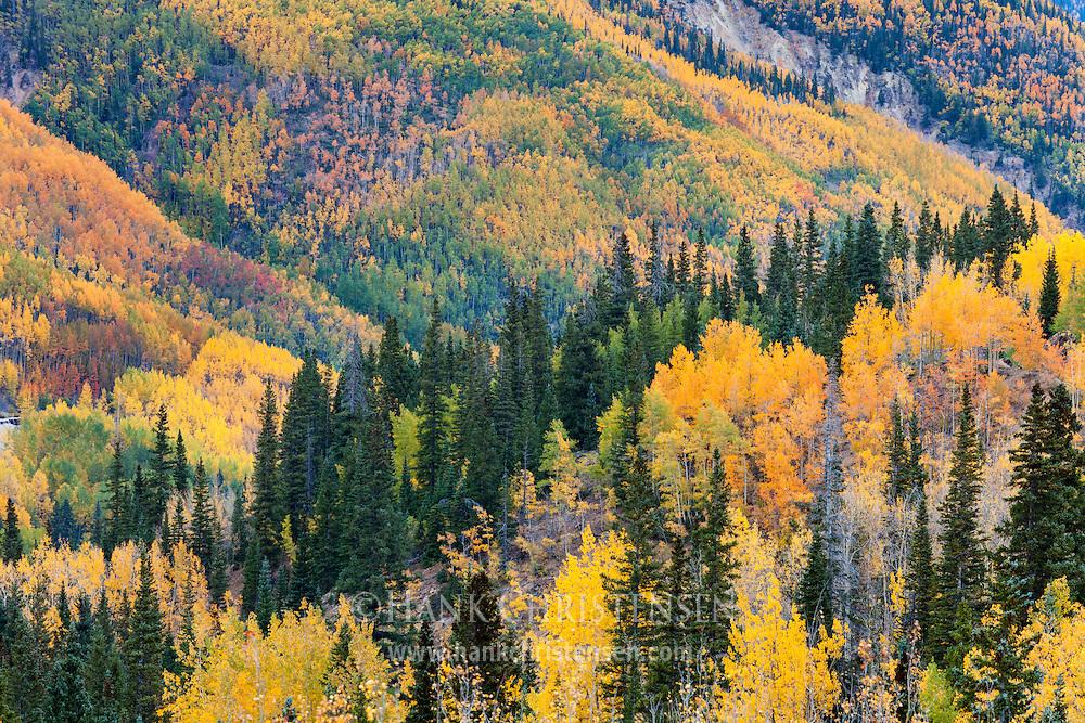 Mountain slopes exhibit a kaleidoscope of color in the fall, Ouray, Colorado