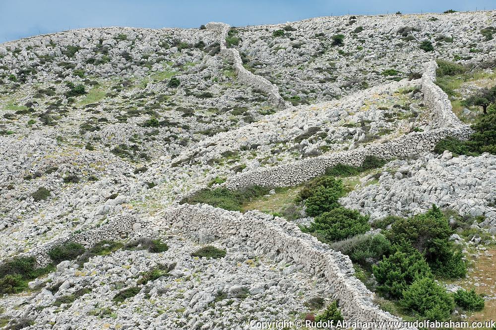 Hiking trail above the steep, rocky northeast coast of Rab, between Kamenjak and Lopar. Rab, Kvarner region, Croatia (24 June 2013). Dry stone walls (suhozid).