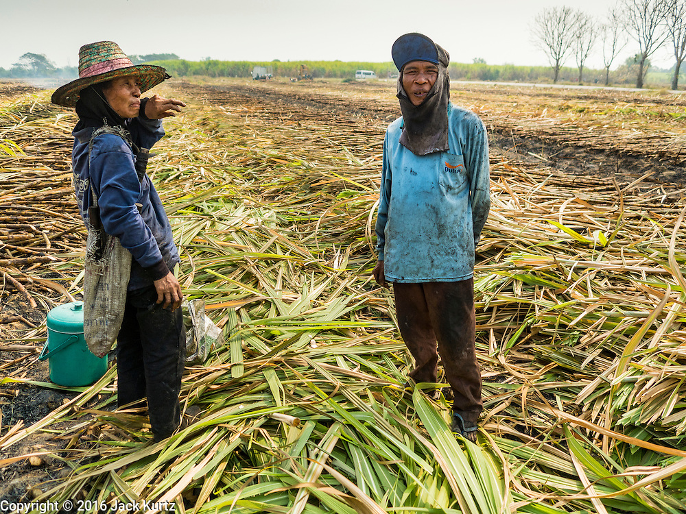 02 FEBRUARY 2016 - THUNG KHOK, SUBPAN BURI, THAILAND: Migrant farm worker from eastern Thailand in a sugar cane field during the harvest in Suphan Buri province, in western Thailand. Thai sugar cane yields are expected to drop by about two percent for the 2015/2016 harvest because of below normal rainfall. The size of the crop is expected to increase slightly though because farmers planted more sugar cane acreage this year. Thailand is the second leading exporter of sugar in the world. Thai sugar growers are hoping a good crop would make up for shortages in global markets caused by lower harvests in Brazil and Australia, where sugar yields have been stunted by drought. Because of the drought in Thailand, sugar exports are expected to drop by up to 20 percent, contributing to a global sugar shortage. The drought is is also hurting the quality of Thai sugar, because sugarcane grown in drought is less sweet than normal so mills need to process more cane to make the same amount of sugar. Thai sugar farmers have lost 20 percent to 30 percent of their output this year because of the drought.        PHOTO BY JACK KURTZ