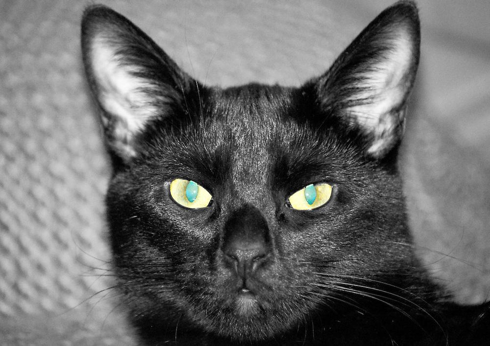 Loki, the friendly feline.