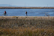 Visitors ride their bikes along the marsh during Santa Clara County Parks Day on the Bay event at Alviso Marina County Park in Alviso, California, on October 13, 2013. (Stan Olszewski/SOSKIphoto)