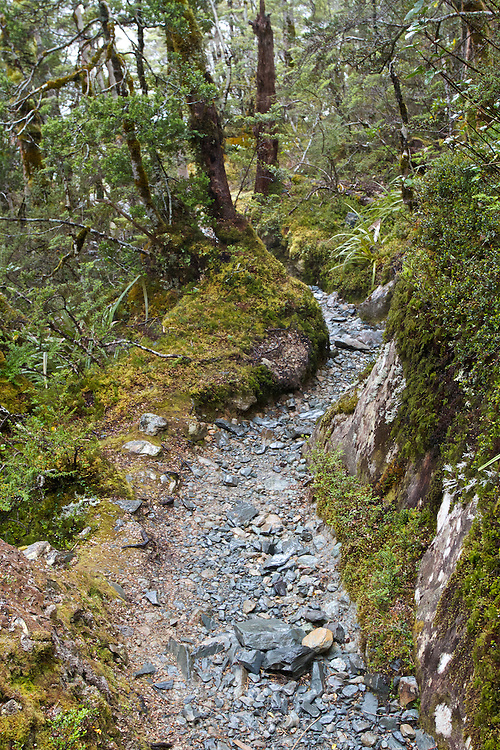 Light drizzle on the Routeburn Track between the Routeburn Shelter and Routeburn Falls.