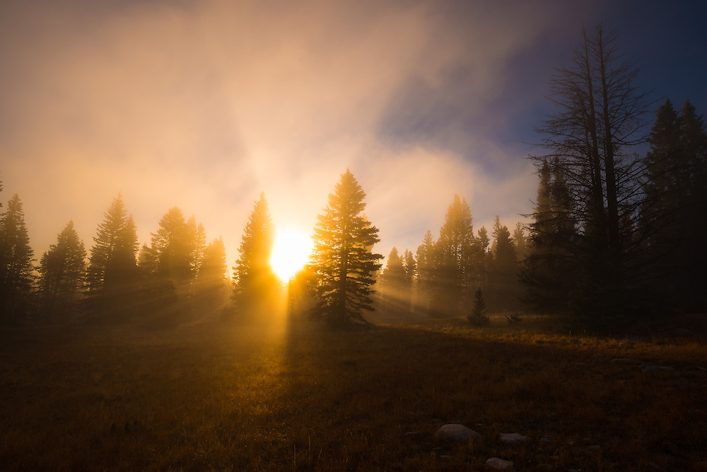 Sunlight pierces through the fog high-atop the Brazos near Chama, New Mexico.