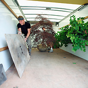 Men place Japanese Maple trees in a moving truck so the trees can be transplanted in new locations.