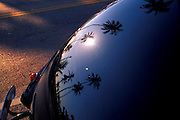 Palm Trees Reflected in Trunk of Antique Automobile, Miami Beach, FL