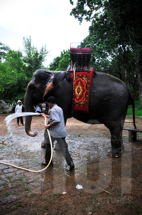 Cambodian washing an elephant, Phnom Penh, Cambodia, Southeast Asia