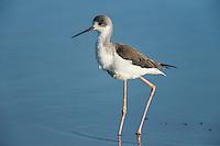 De Hoop Nature Reserve, Western Cape, South Africa