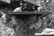 Camilla Goddard City Beekeeper.