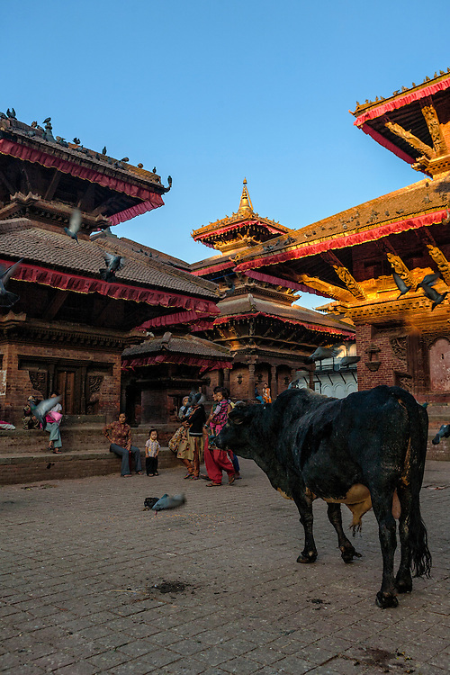A cow stands among some of Durbar Square ancient temples.
