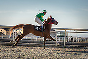 Professional horse racing is a relatively new sporting event in Iraq's Kurdish region and one that has been increasing in popularity since Erbil's International Equestrian Club began organizing regular races last year.  Now the club hosts two races every month, as well as other events including show-jumping competitions.