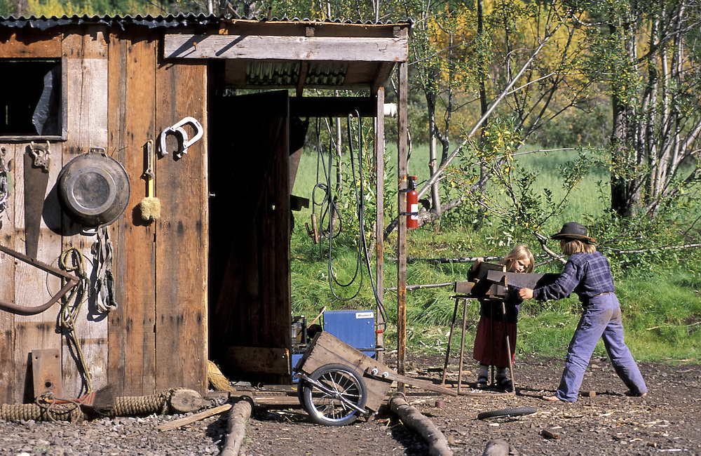 Lamb and Job working.The Pilgrim Family.Alaska.USA