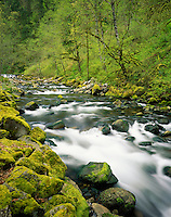 Spring along Tanner Creek, Columbia River Gorge National Scenic Area Oregon USA