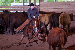September 23, 2017 - Minshall Farm Cutting 5, held at Minshall Farms, Hillsburgh Ontario. The event was put on by the Ontario Cutting Horse Association. Riding in the Non-Pro Class is Eric Bouchard on The Rey Slim Shady owned by the rider.