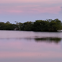 Mangrove bird roost in pink sunset light, Deering Bay, South Miami,  Florida